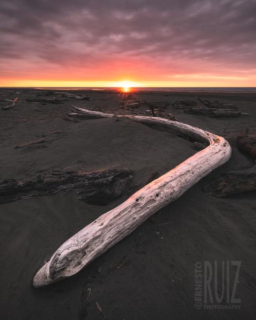 Himatangi Driftwood